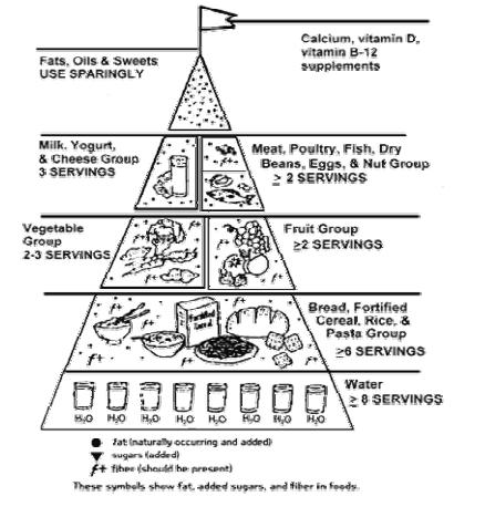 New Food Pyramid For Seniors – Ages 50, 70 and Beyond ...